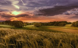Wheat fields, trees, clouds, sunset