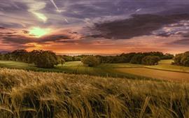 Пшеничные поля, деревья, облака, закат