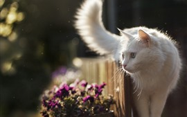 Preview wallpaper White cat look, fence, backlight