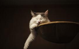 Белый кот спит, лапы