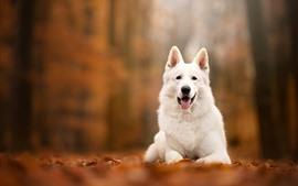 Vista frontal do cão branco, outono