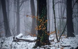Inverno, neve, floresta, árvores, folhas amarelas