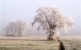 Inverno, neve, geada, árvore, campos