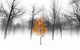 Зима, деревья, снег, туман, утро