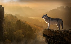 Wolf, rocks, cliff, mountains, trees, fog
