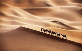 Preview wallpaper Xinjiang, Kumtag Desert, camel