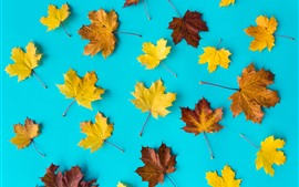 Preview wallpaper Yellow and brown maple leaves, blue background