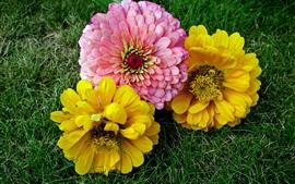 預覽桌布 黃色和粉紅色的花朵,地面