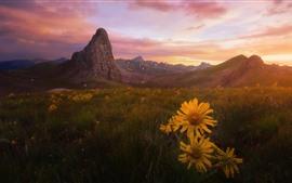 Flores amarillas, hierba, montañas, puesta de sol.