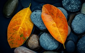 Preview wallpaper Yellow leaves, stones, water, still life