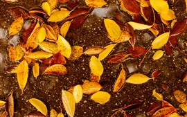 Yellow leaves, water, autumn
