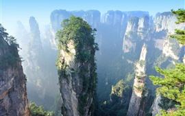 Zhangjiajie, cliff, rocks, bushes, China