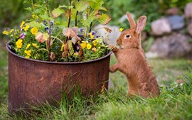 Preview wallpaper A brown rabbit, flowers, meadow