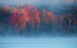 Outono, manhã, árvores, nevoeiro, rio
