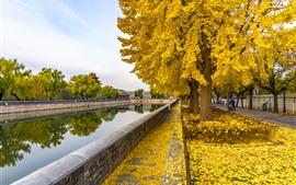 Outono, rio, árvores, folhas amarelas, parque, China