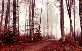 壁紙のプレビュー 秋、木々、赤い葉、霧、朝