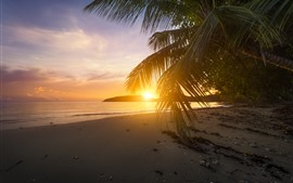 Preview wallpaper Beach, palm tree leaves, sunset, glare