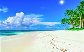 Beach, palm trees, blue sky, summer, tropical
