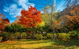 Beautiful autumn, park, trees, red and green leaves, sunshine
