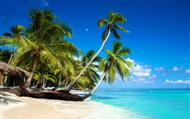 Preview wallpaper Beautiful beach, palm trees, sea, blue sky, clouds, tropical