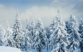 Preview wallpaper Beautiful winter, snow, trees, forest