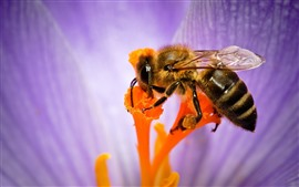 Bee macro photography, insect, purple flower