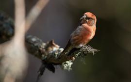 Птица оглянуться назад, дерево