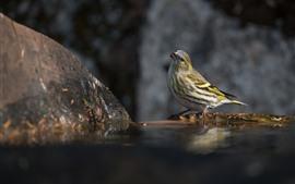 Pájaro, agua, rocas