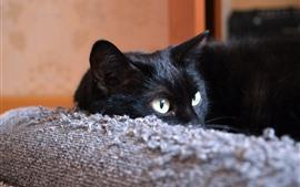 Gato negro, ojos, sofa.