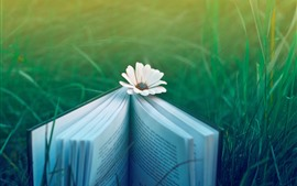 Preview wallpaper Book, white flower, green grass