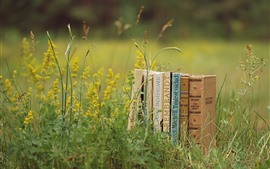 Preview wallpaper Books, grass, wildflowers