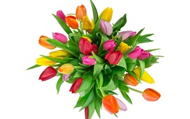 Preview wallpaper Bouquet, tulips, pink, yellow, red flowers, white background