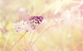 Mariposa, insecto, flores, brumoso.