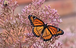 Butterfly, wings, pink little flowers, insect