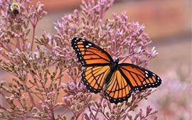 Mariposa, alas, florecitas rosadas, insecto.