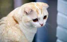 Cat look back, brown eyes
