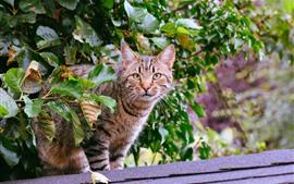 Mirada de gato, hojas verdes.