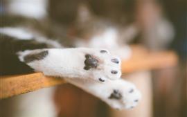 Close das patas de gato