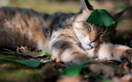 Cat sleeping, green leaf