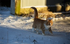 Cat walking in the snow, winter