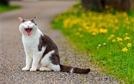 Preview wallpaper Cat yawn, yellow flowers