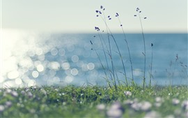 Coast, grass, hazy, shine, sea
