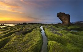 Costa, rochas, musgo, pôr do sol, mar