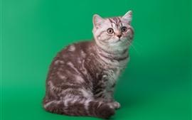 Cute kitten, green background