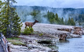 Preview wallpaper Deer, trees, fog, Yellowstone National Park, USA