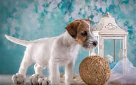 Preview wallpaper Dog and ball, lantern