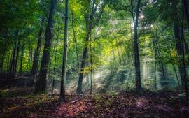 Лес, деревья, зеленый, лето