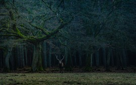 Preview wallpaper Forest, trees, lonely deer