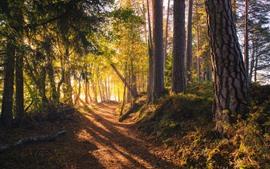 Floresta, árvores, raios de sol, sombra, caminho