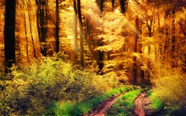 Forest, trees, yellow leaves, sun rays, autumn